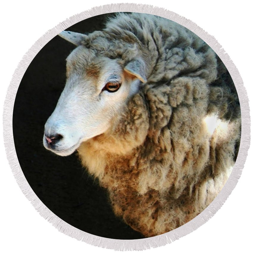 Ewe Are So Beautiful Round Beach Towel featuring the photograph Ewe Are So Beautiful by Ellen Henneke