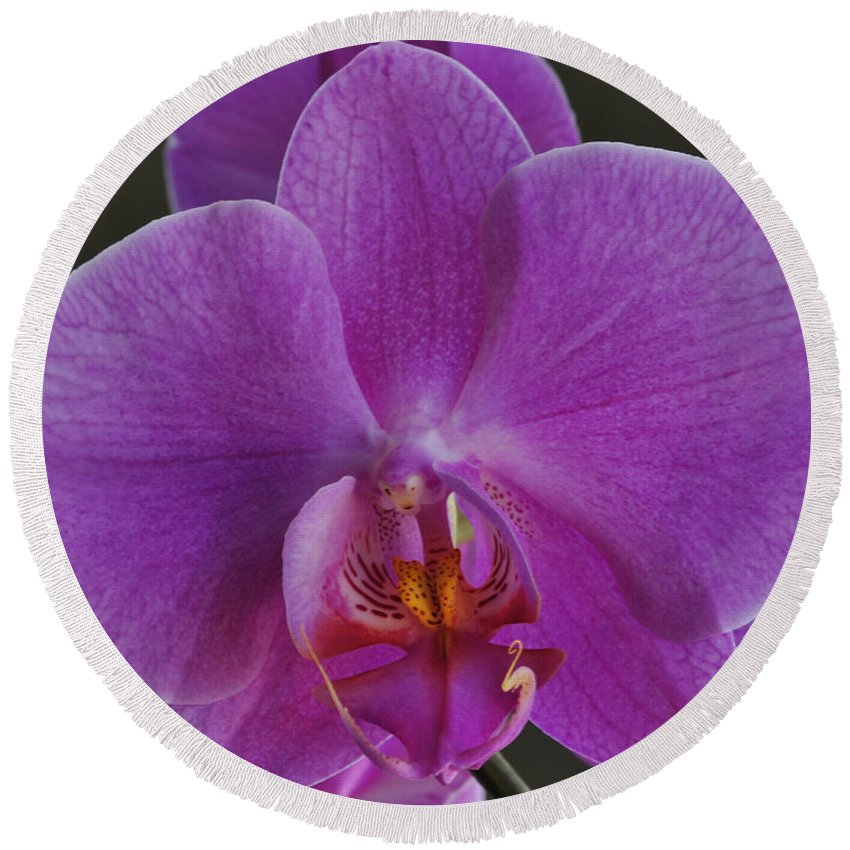 Round Beach Towel featuring the photograph Exotic Orchid 2 by Jim Hogg