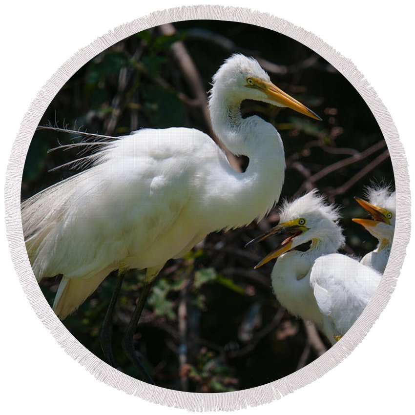 Egret Round Beach Towel featuring the photograph Eye Of The Egret by Dale Powell