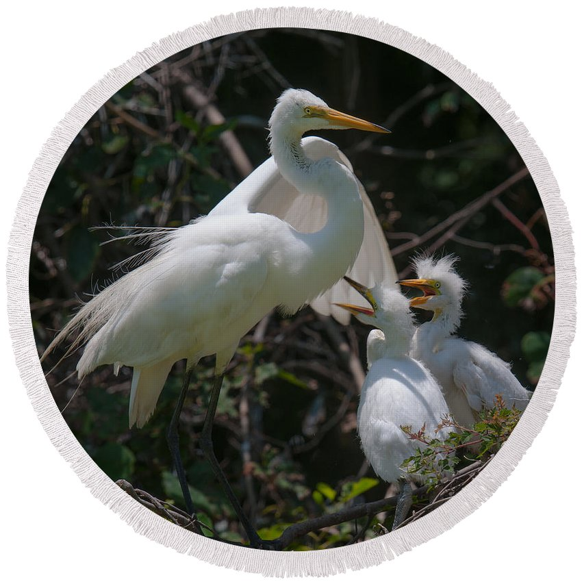 Egret Round Beach Towel featuring the photograph Eye Of The Heron by Dale Powell