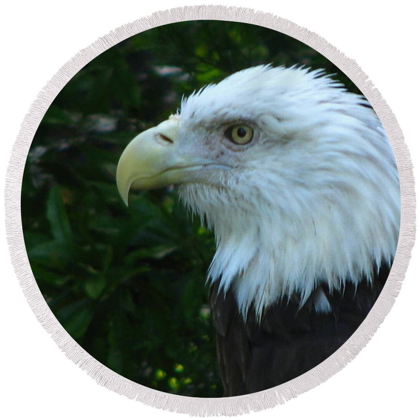 Eagle Round Beach Towel featuring the photograph Eyecon by Greg Patzer