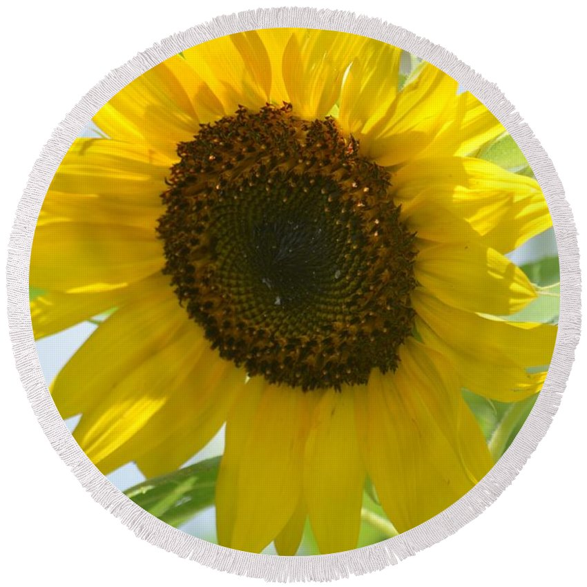Face To Face With A Sunflower Round Beach Towel featuring the photograph Face To Face With A Sunflower by Maria Urso