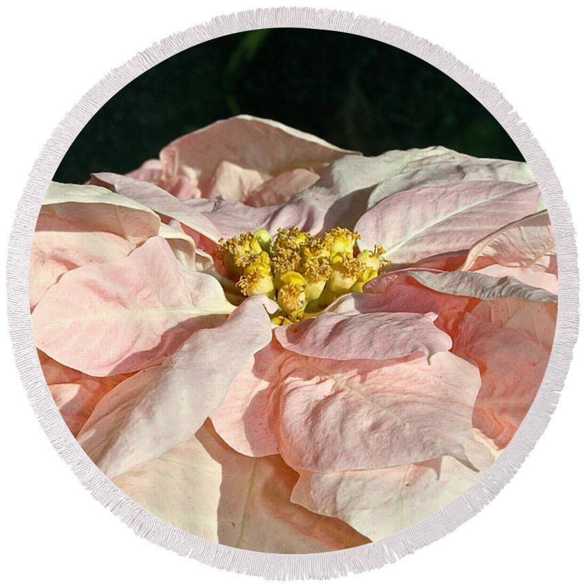 Flower Round Beach Towel featuring the photograph Faded Coral by Susan Herber