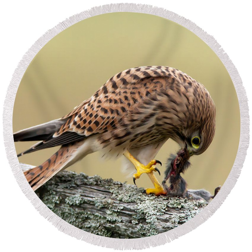 Kestrel Round Beach Towel featuring the photograph Falcon's Breakfast by Torbjorn Swenelius