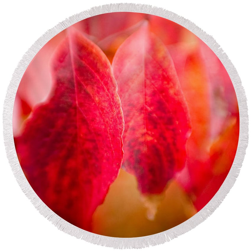 Color Round Beach Towel featuring the photograph Fall Colors 0666 by Timothy Bischoff