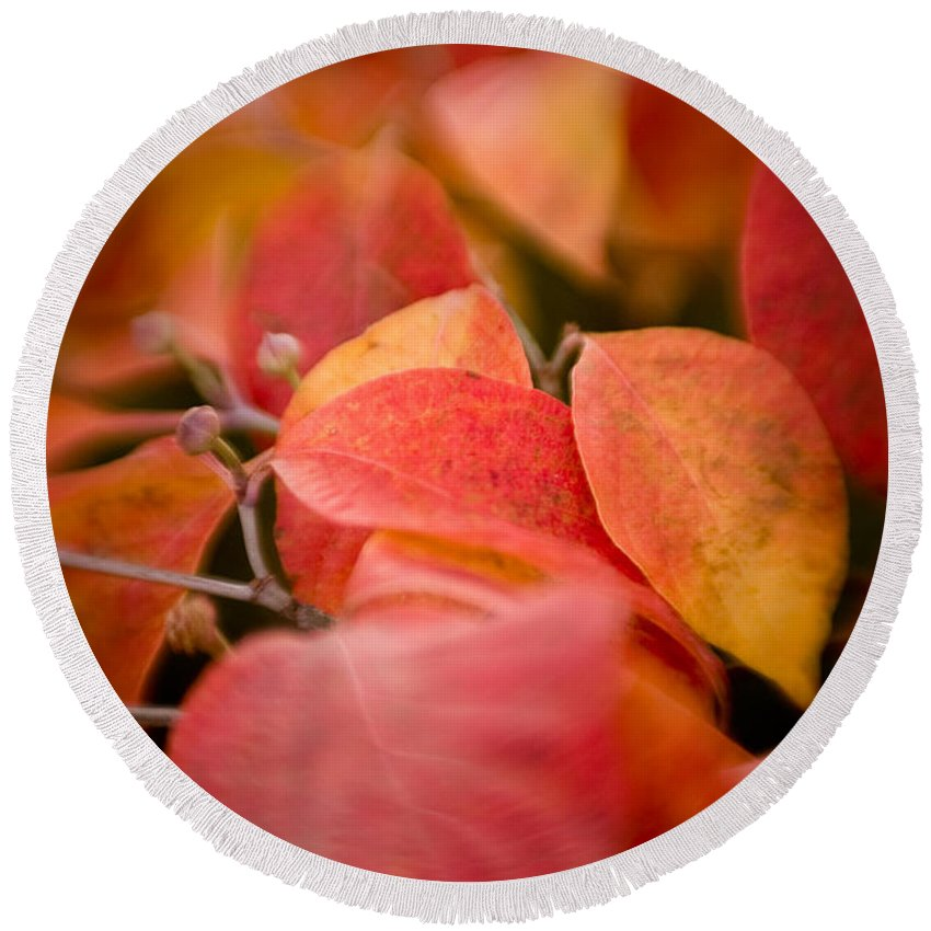 Color Round Beach Towel featuring the photograph Fall Colors 6675 by Timothy Bischoff