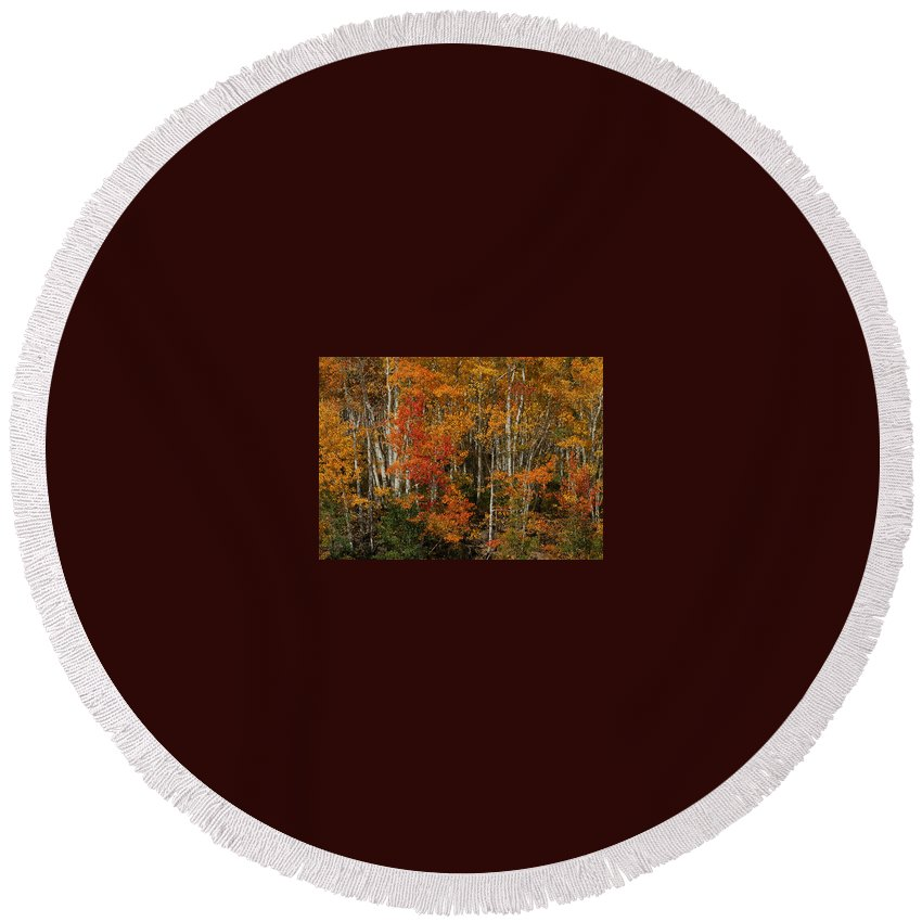 Fall Colors Round Beach Towel featuring the photograph Fall Colors Greeting Card by Ernie Echols