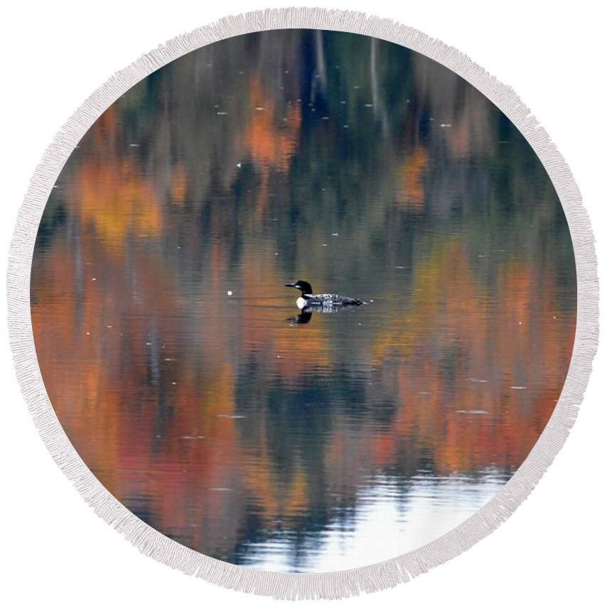 Loon Round Beach Towel featuring the photograph Fall Loon by Thomas Phillips