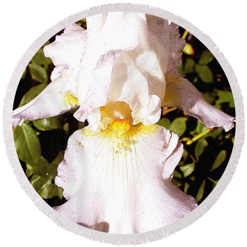 Iris Round Beach Towel featuring the photograph Fancy Lady White Iris by Jerome Stumphauzer