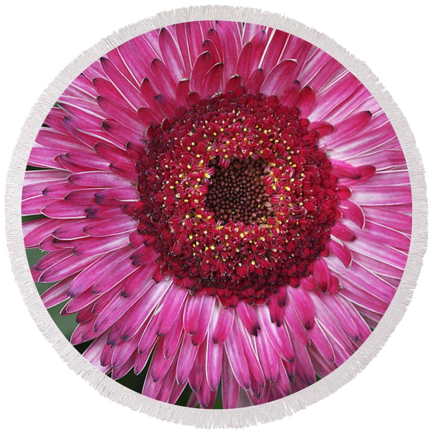 Flower Round Beach Towel featuring the photograph Fancy Pink Daisy by Deborah Benoit