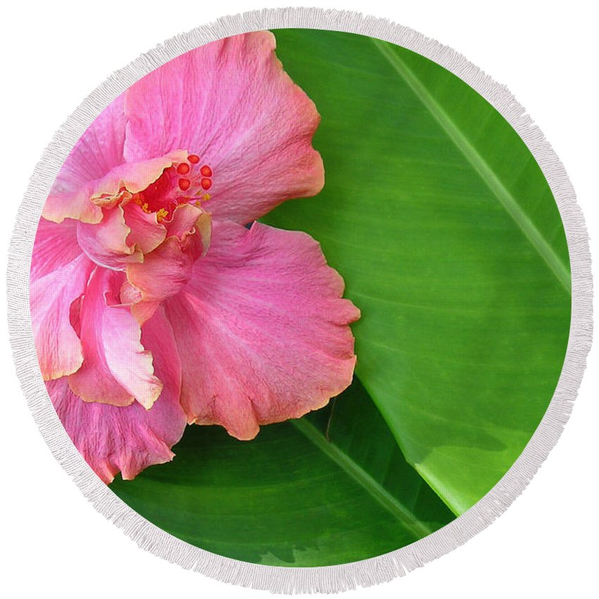 Hawaii Iphone Cases Round Beach Towel featuring the photograph Favorite Flower 2 by James Temple