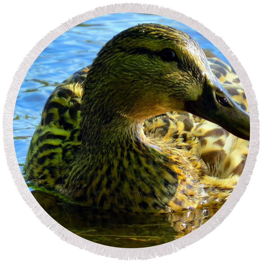 Mallard Round Beach Towel featuring the photograph Feathered Female by Art Dingo