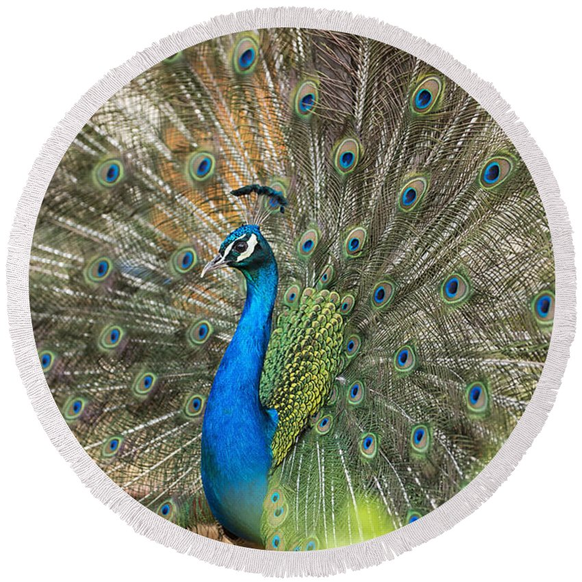 Peacock; Feathers Round Beach Towel featuring the photograph Feathers by Focus Fotos