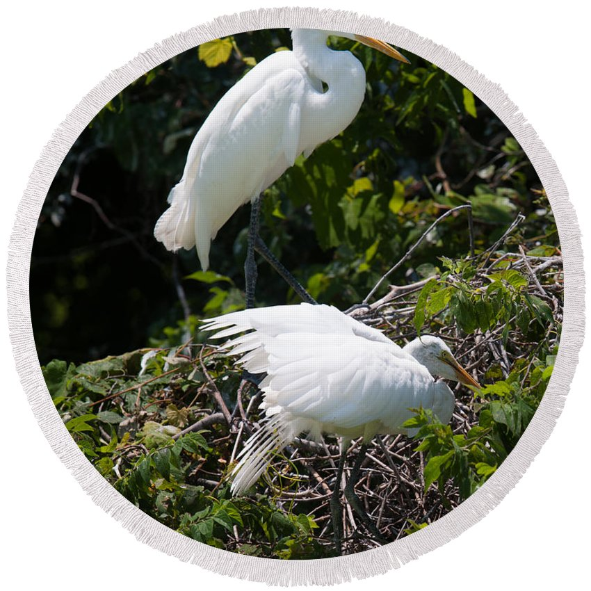 Egret Round Beach Towel featuring the photograph Feathers In A Twist by Dale Powell