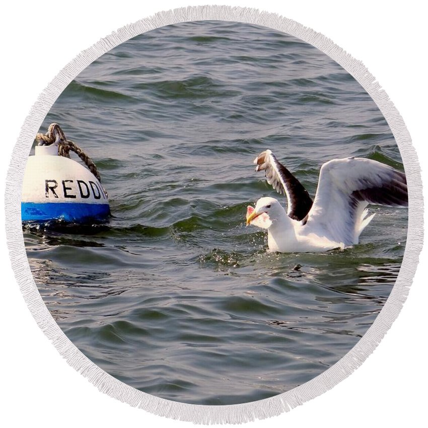 Nature Water Seagull Round Beach Towel featuring the photograph Feeding Time by Ed Weidman
