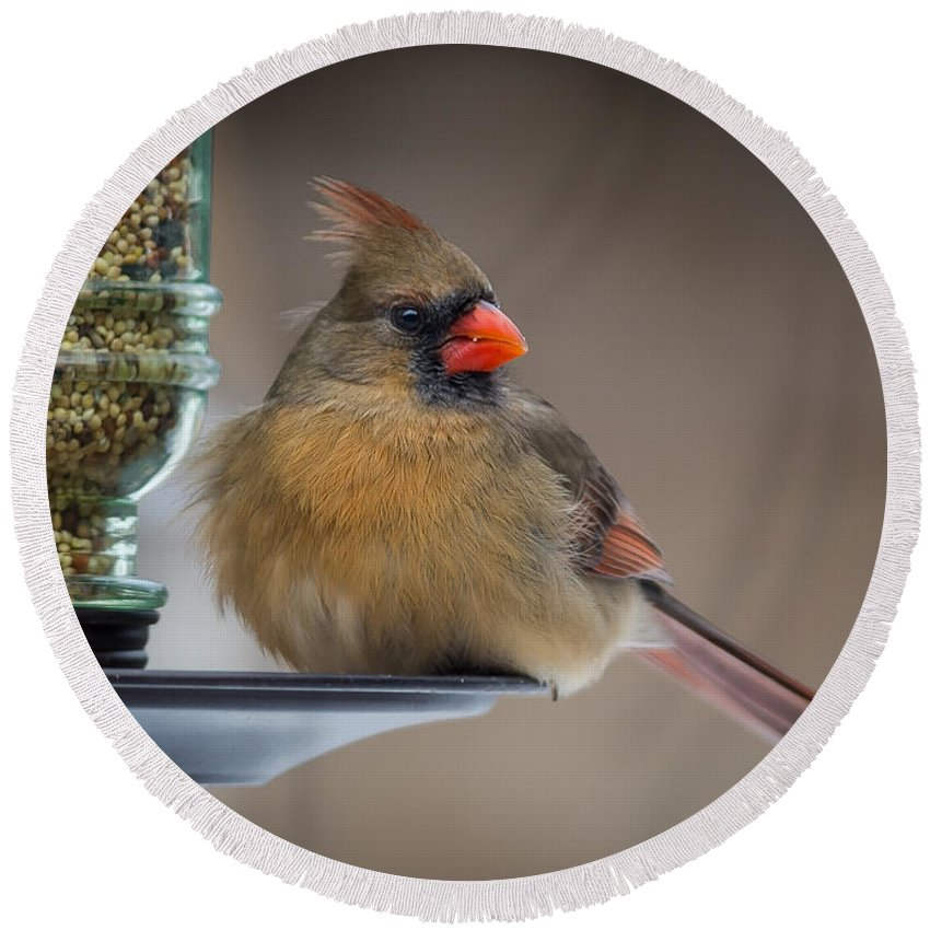 Cardinal Round Beach Towel featuring the photograph Female Cardinal by David Downs