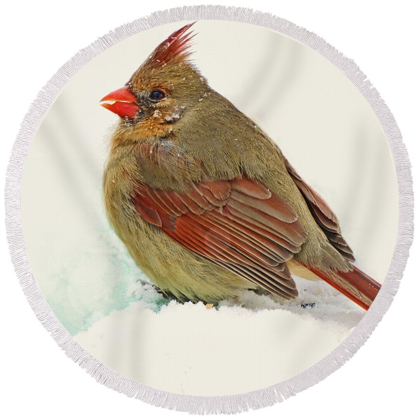 Birds Round Beach Towel featuring the photograph Female Cardinal In Winter II by Debbie Portwood