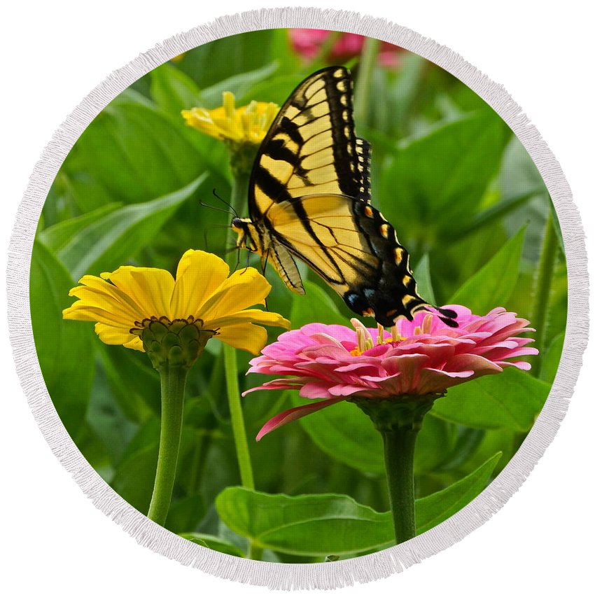 Emale Tiger Swallowtail And Zinnia Round Beach Towel featuring the photograph Female Tiger Swallowtail Butterfly With Pink And Yellow Zinnias by Byron Varvarigos