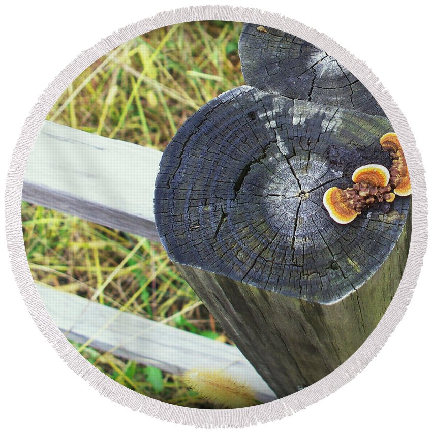 Arcitecture Round Beach Towel featuring the photograph Fence Post Fungi by Debbie Portwood