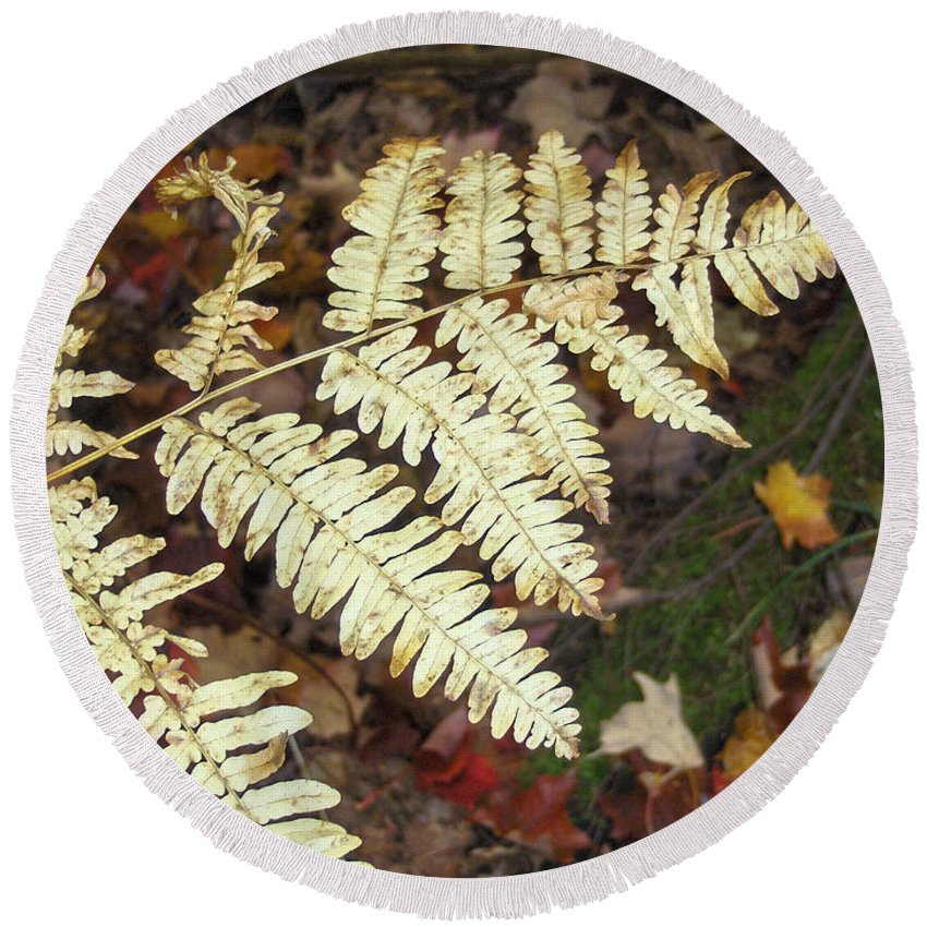 Fern Round Beach Towel featuring the photograph Fern In The Forest by Brenda Brown