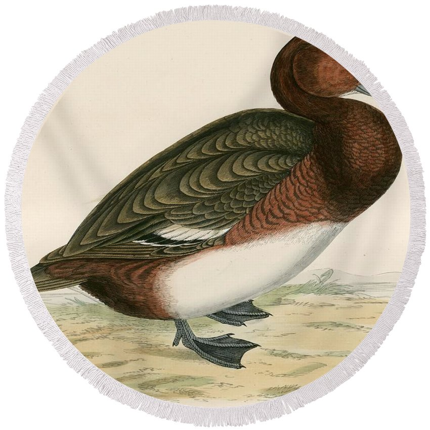 Birds Round Beach Towel featuring the painting Ferruginous Duck by Beverley R Morris