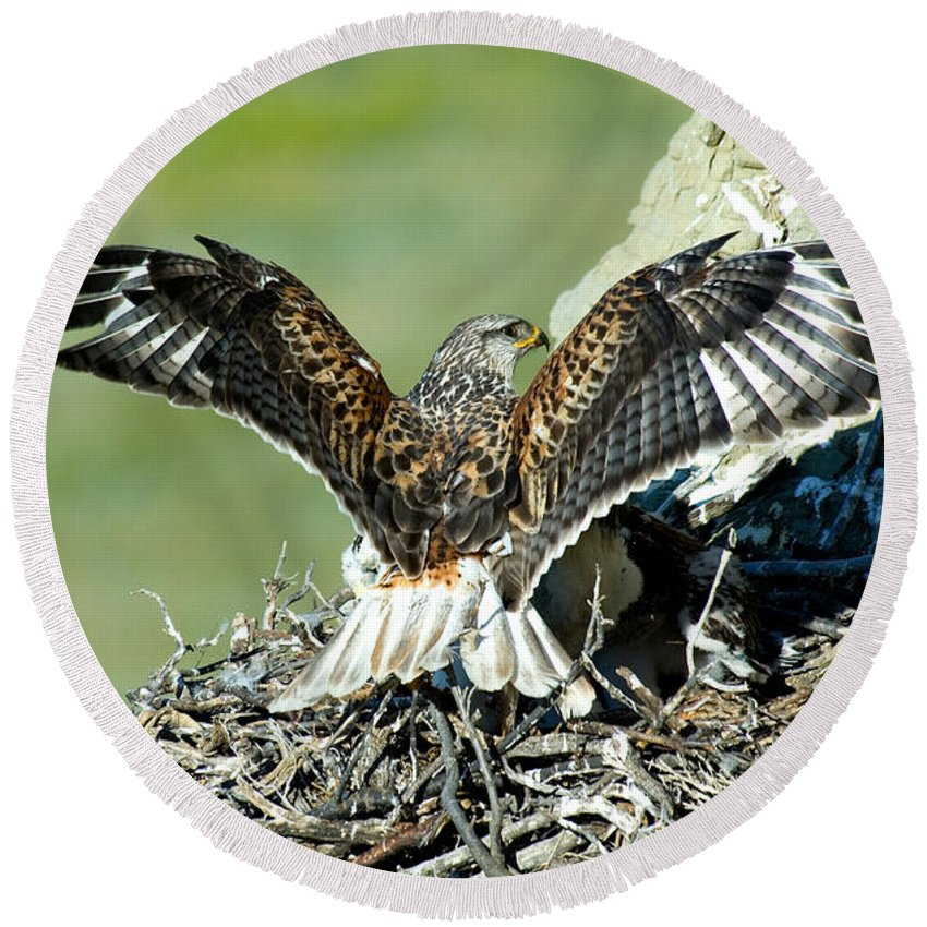 Animal Round Beach Towel featuring the photograph Ferruginous Hawk Male At Nest by Anthony Mercieca