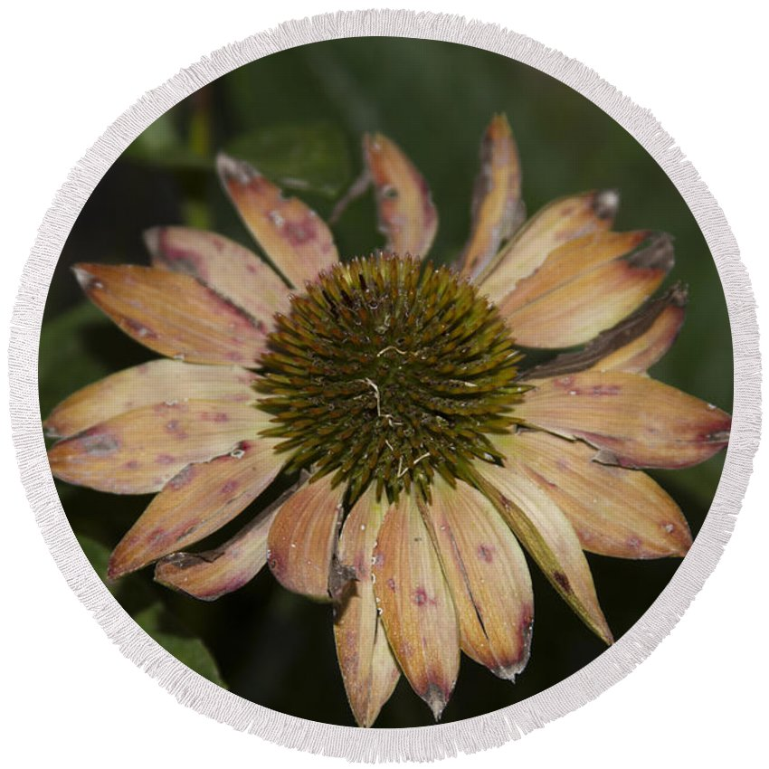 Yellowish & Tan Flower Round Beach Towel featuring the photograph Ff-02 by David Yocum