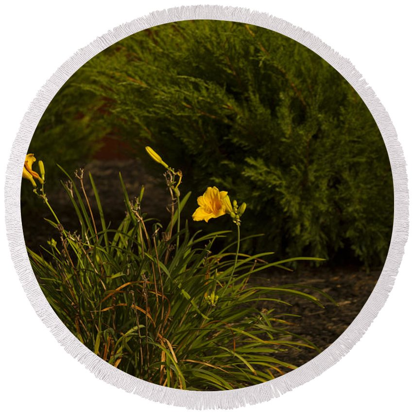 Evergreens Round Beach Towel featuring the photograph Ff-07 by David Yocum