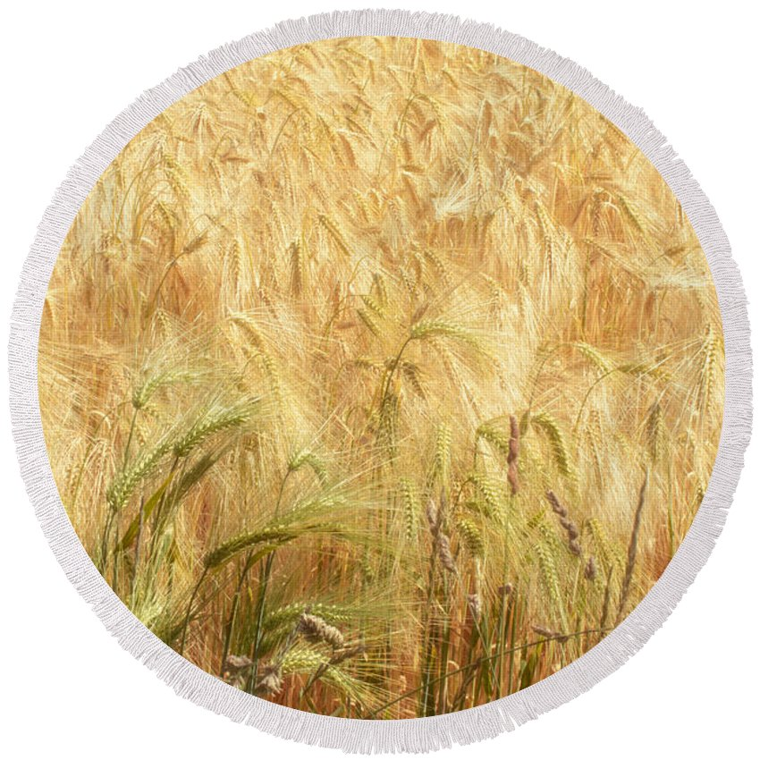 Wheat Round Beach Towel featuring the photograph Field Of Gold - 3 by Ann Garrett