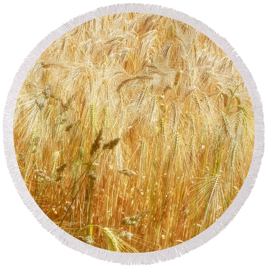 Wheat Round Beach Towel featuring the photograph Field Of Gold 1 by Ann Garrett