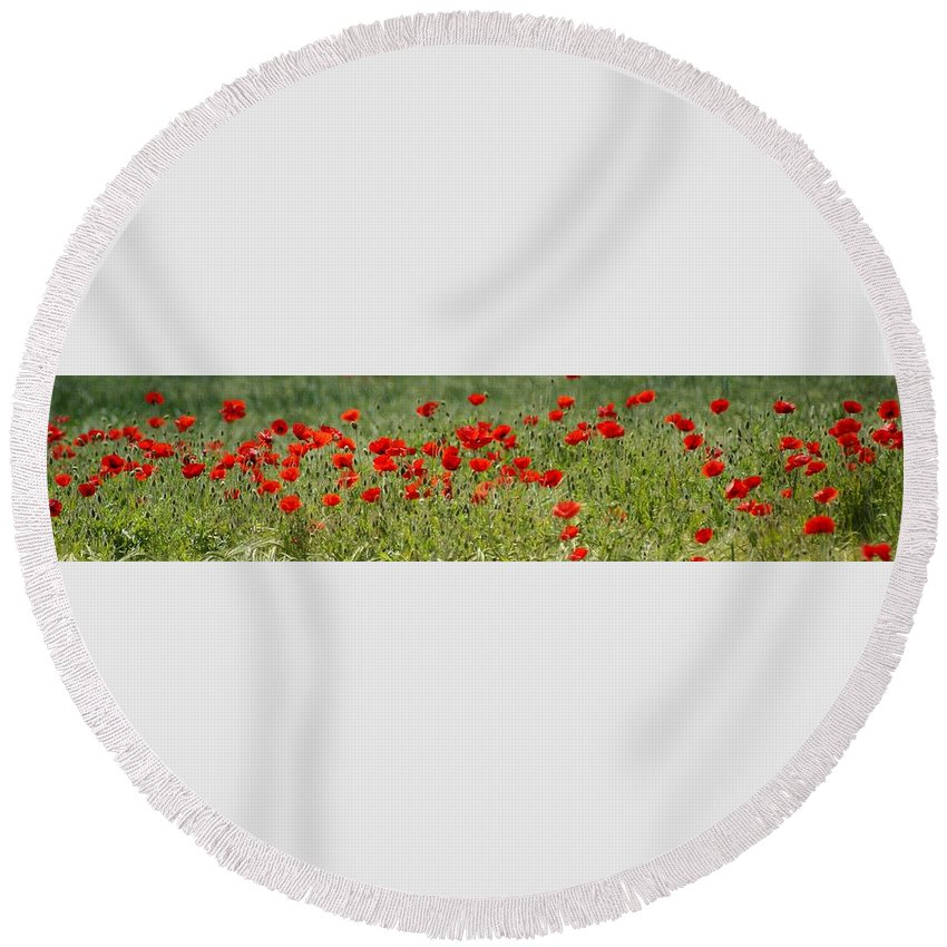 Poppies Round Beach Towel featuring the photograph Field Of Poppies by Carol Lynch