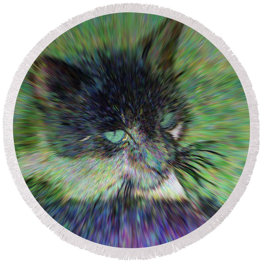 2d Round Beach Towel featuring the photograph Filtered Cat by Brian Wallace