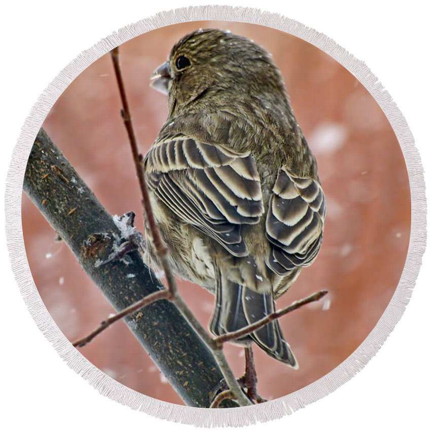 Nature Round Beach Towel featuring the photograph Finch On A Snowy Day by Debbie Portwood