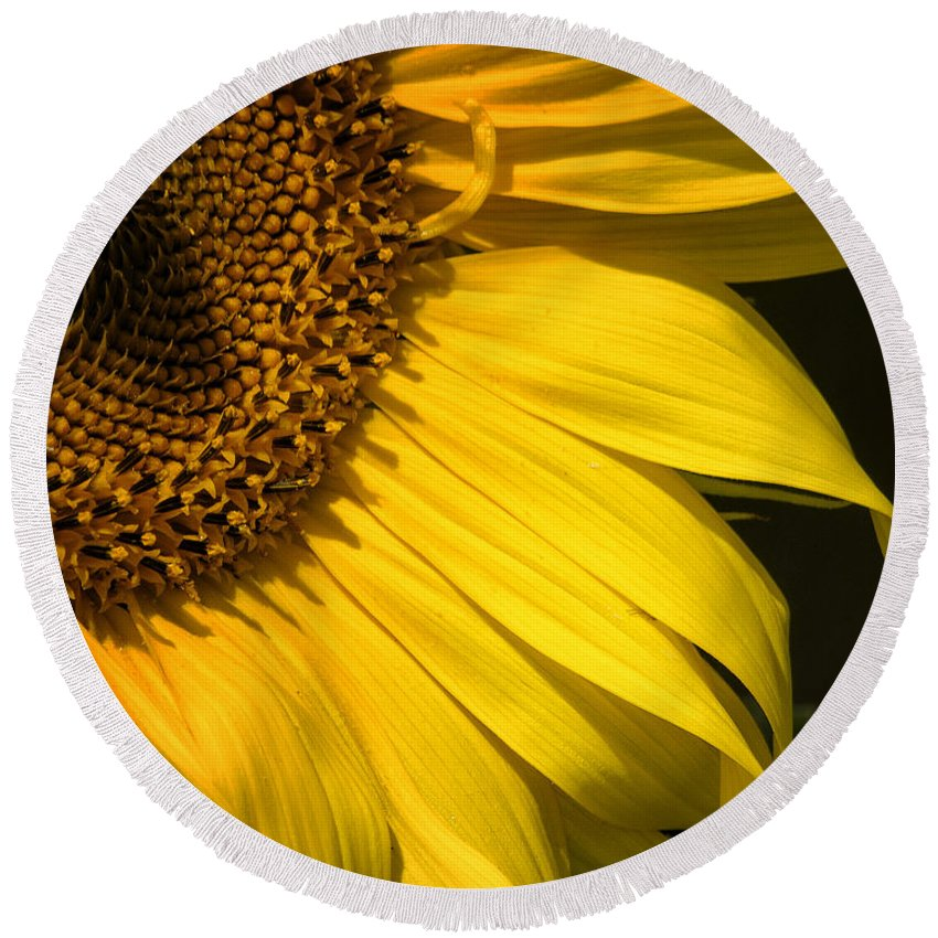 Sunflower Round Beach Towel featuring the photograph Find The Spider In The Sunflower by Belinda Greb
