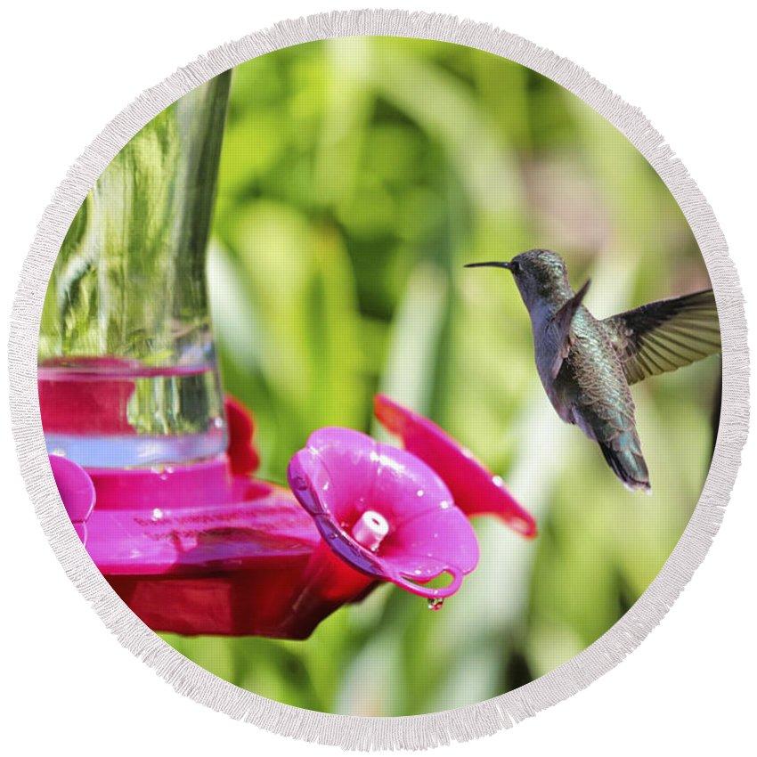 Hummingbird Round Beach Towel featuring the photograph Fine Feathered Hummingbird by Carol Groenen