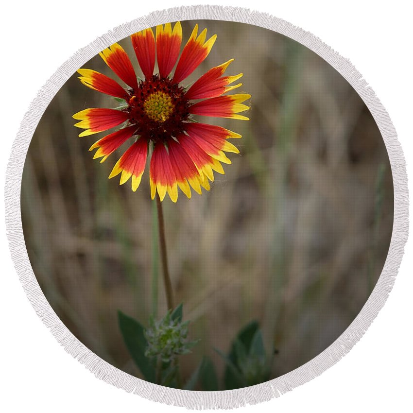 Colorful Round Beach Towel featuring the photograph Firewheel by Ernie Echols