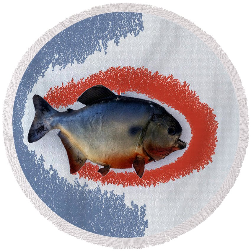 Animals Round Beach Towel featuring the photograph Fish Mount Set 12 B by Thomas Woolworth