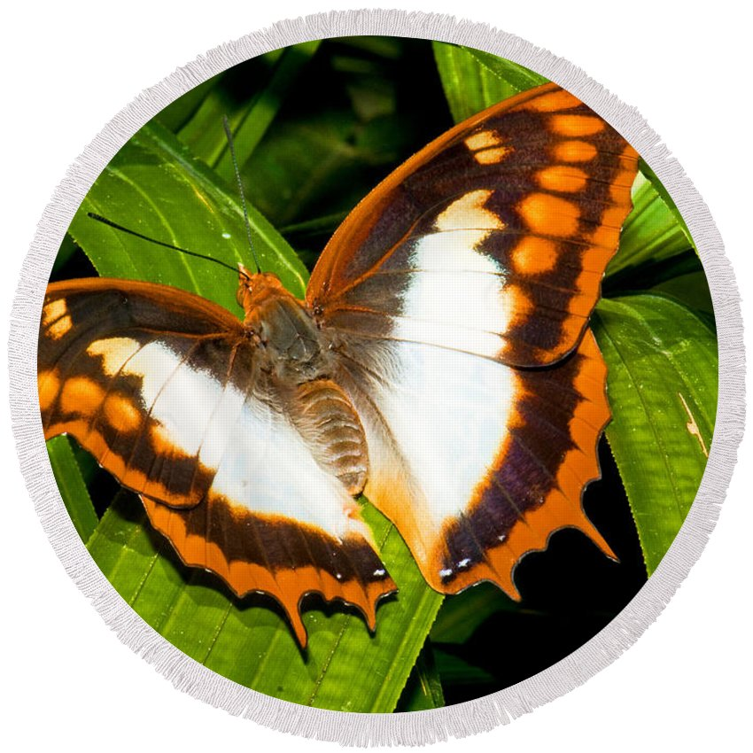 Animal Round Beach Towel featuring the photograph Flame Bordered Charaxes Butterfly by Millard H. Sharp