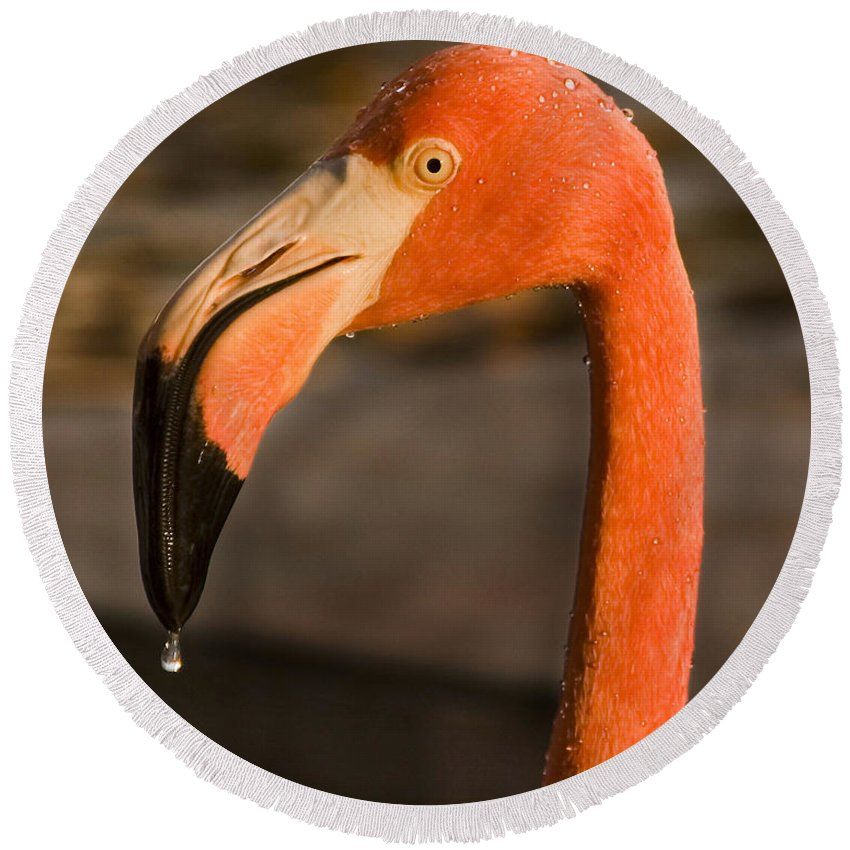 3scape Round Beach Towel featuring the photograph Flamingo by Adam Romanowicz