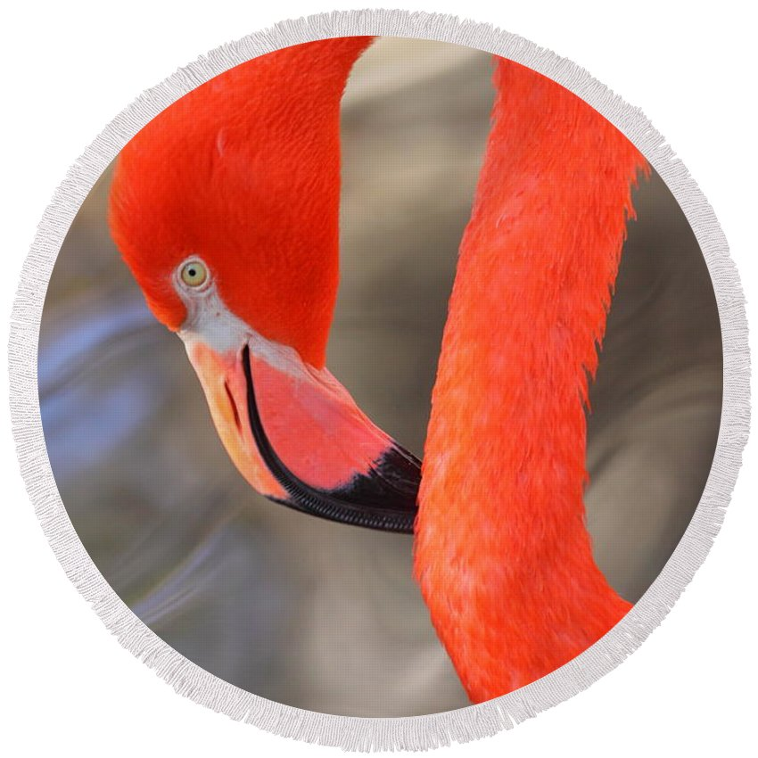 Flamingo Round Beach Towel featuring the photograph Flamingo Curves by Bruce J Robinson
