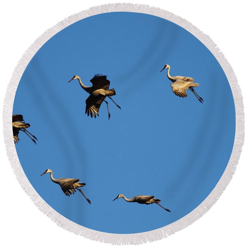 Crane Round Beach Towel featuring the photograph Flight Formation by Bruce J Robinson