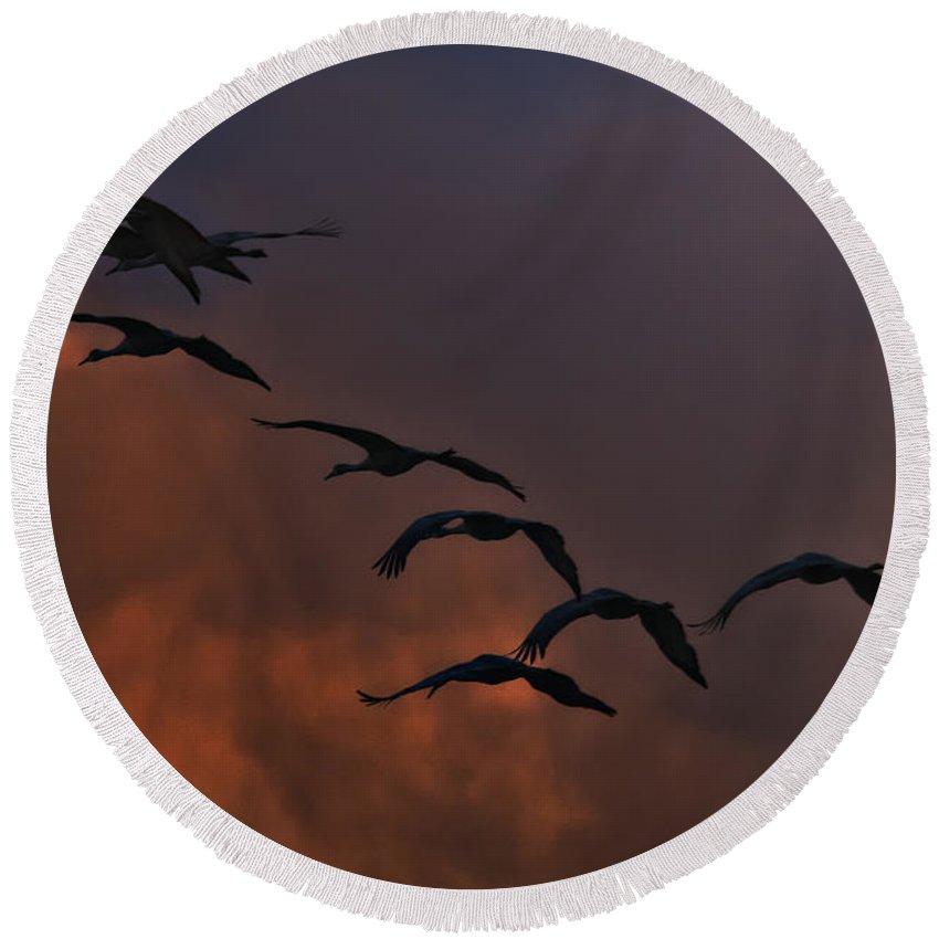 Bosque Del Apache Sandhill Cranes Round Beach Towel featuring the photograph Flight Of The Cranes by Priscilla Burgers