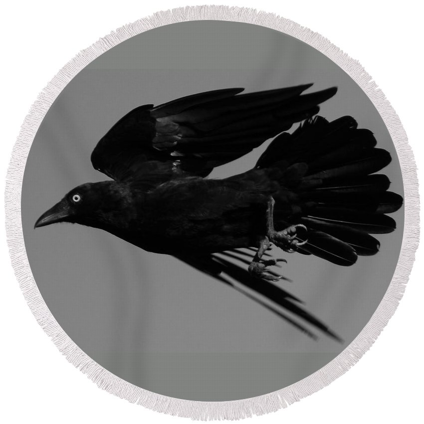 Raven Round Beach Towel featuring the photograph Flight Of The Raven by Bruce J Robinson