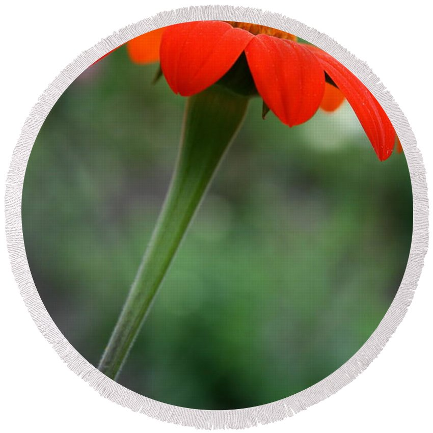 Red Flower Round Beach Towel featuring the photograph Floral Torch by Neal Eslinger