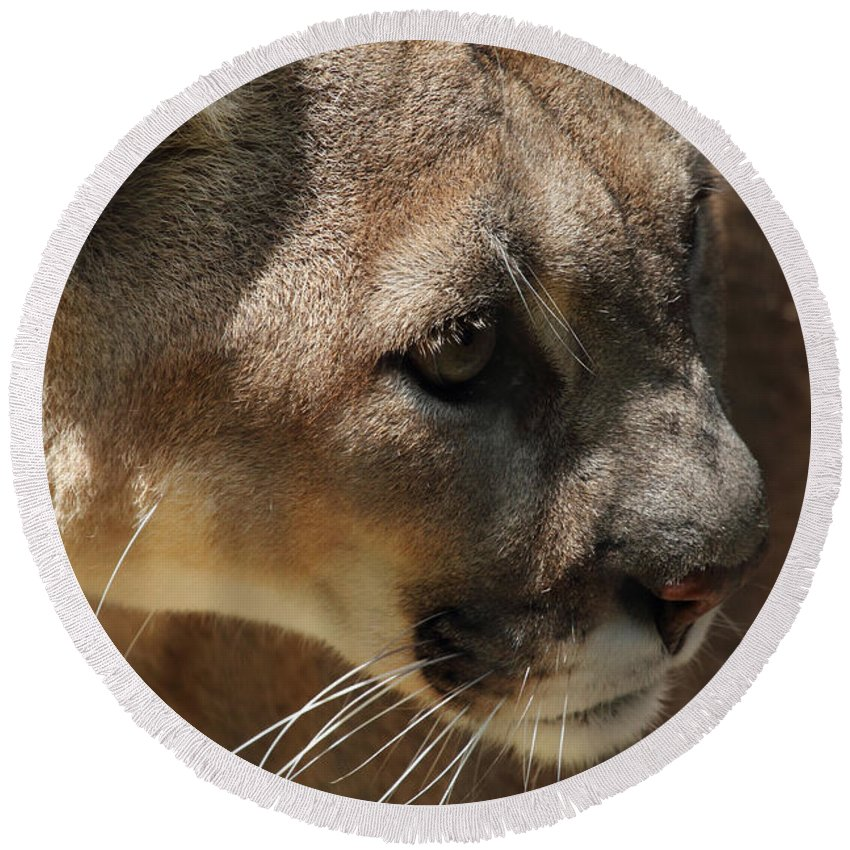 Florida Panther Round Beach Towel featuring the photograph Florida Panther by Meg Rousher