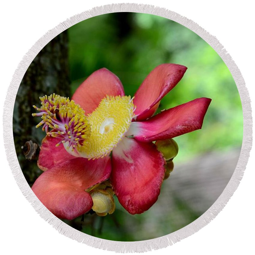 Flower Round Beach Towel featuring the photograph Flower Of Cannonball Tree Singapore by Imran Ahmed