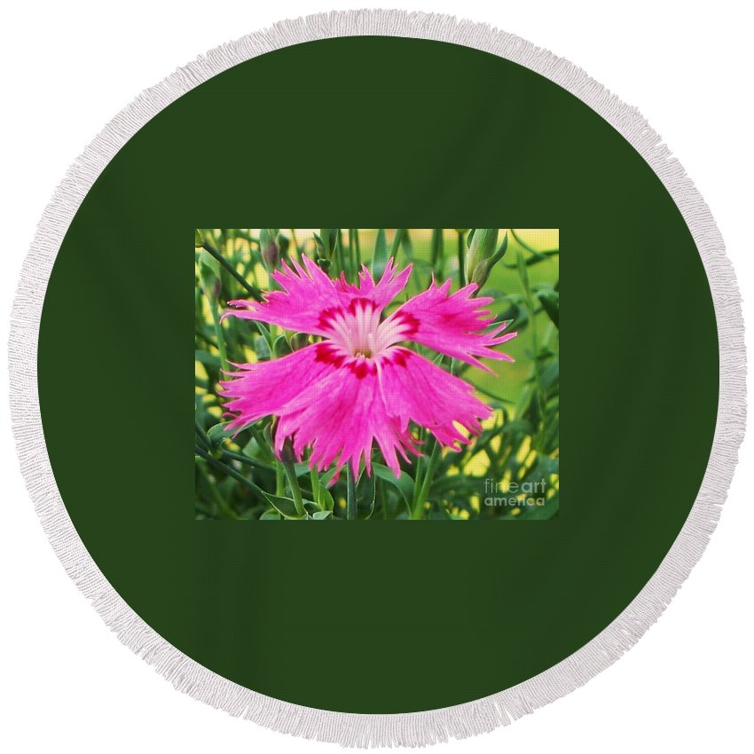 Flower Round Beach Towel featuring the photograph Flower Pink by Eric Schiabor