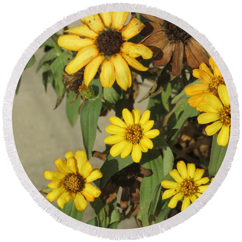 Flowers Round Beach Towel featuring the photograph Flowers In Fall 2 by Anita Burgermeister
