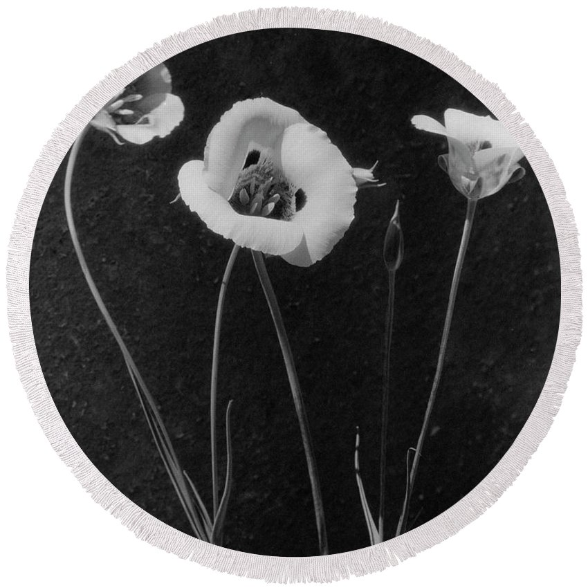 Exterior Round Beach Towel featuring the photograph Flowers In Louise Beebe Wilder's Garden by Harry G. Healy