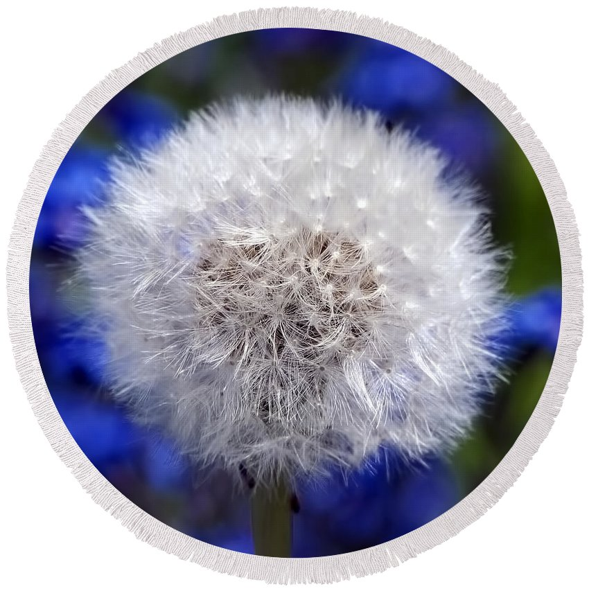 Dandelion Round Beach Towel featuring the photograph Fluffy by Sharon Talson